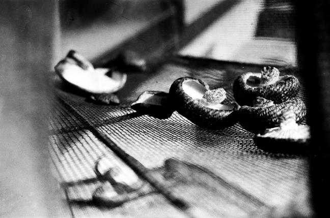 Dry Shiitake